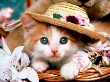 wallpapers_cats_373-1